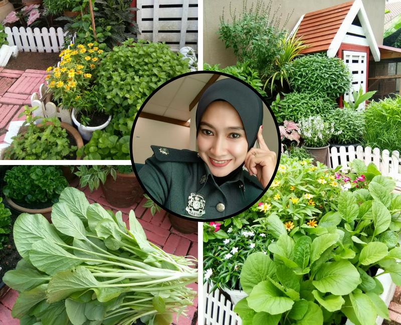 Rezeki Buat Kebun Tepi Rumah Siapa