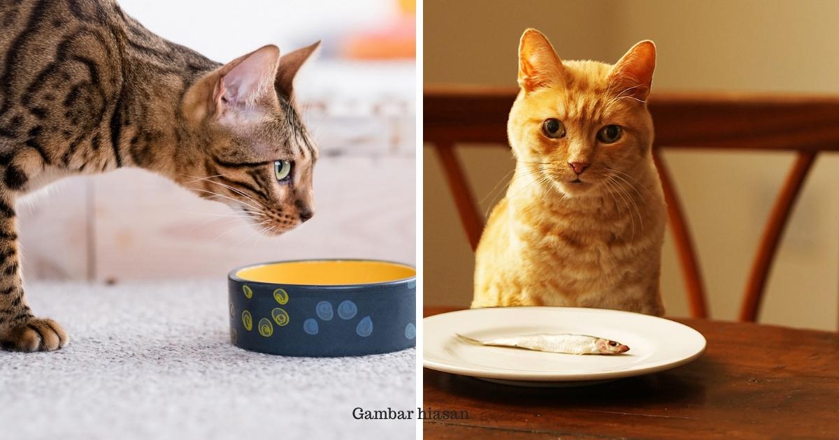 Ini Makanan Yang Tidak Boleh Kucing Makan. Salah Makan ...